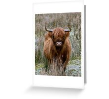 Highland Cow of Scotland Greeting Card