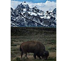Last Buffalo Standing Photographic Print