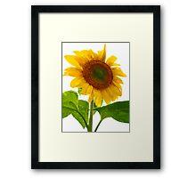 Sunflower Days Framed Print