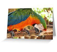 Catalina Macaw Greeting Card