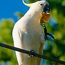 Australian Sulphur-Crested Cockatoo. #2 Berwick, 2013. by johnrf