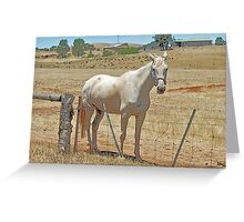 '' OUTBACK HORSE '' Greeting Card