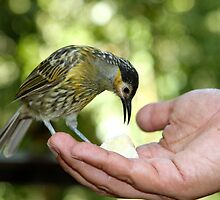 A Bird in the Hand... by styles