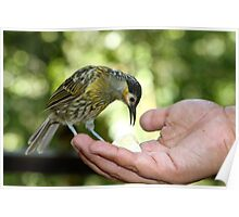 A Bird in the Hand... Poster