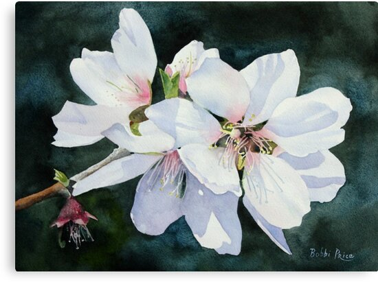 Almond Blossoms by Bobbi Price