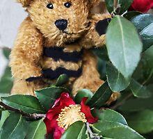 Bumble Bear by heatherfriedman