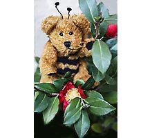 Bumble Bear Photographic Print
