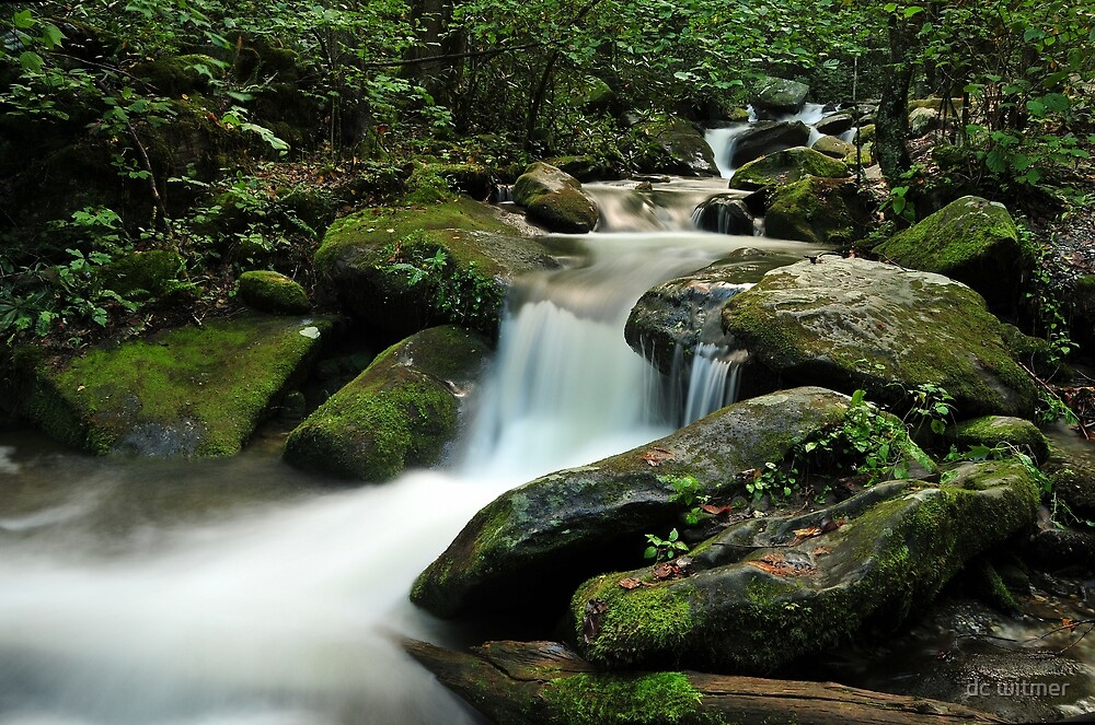 waterfall in the Smokies by dc witmer