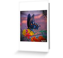 Butterfly on paradise bush Greeting Card