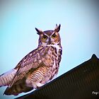 Great horned owl  by Peg Robb