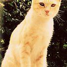 Spy Cat 2013 II by tropicalsamuelv