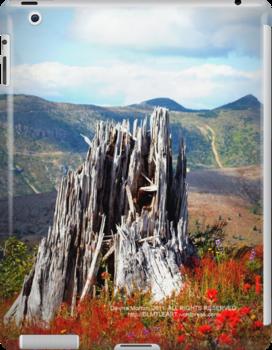 Johnston's Ridge like something out of Oz by Dawna Morton