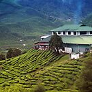 Quaint house in exotic tea plantation by hazelong