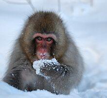 Snowy monkey  by Istvan Hernadi