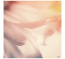 Softest Soft Photographic Print