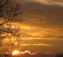 Gilded Skies by Rachel Tyrrell