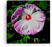 Pink Tinged Hibiscus Canvas Print