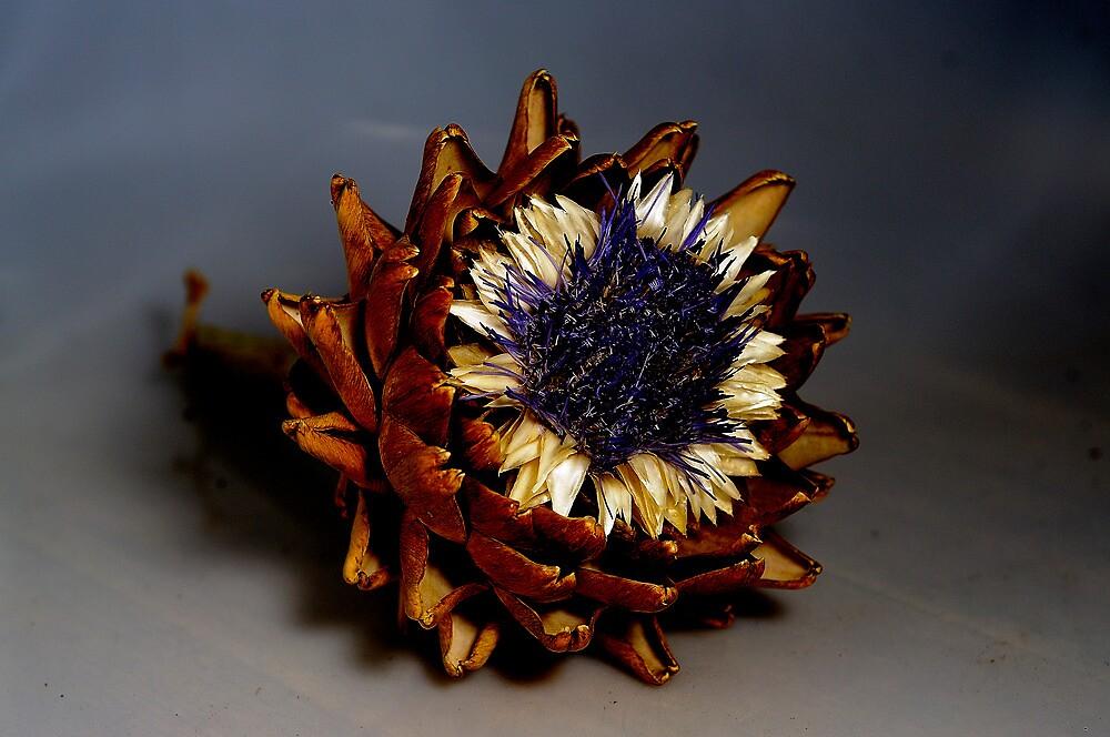 Artichoke flower by Bernie Rosser