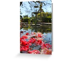 'Lillies @ Buda'  Castlemaine Victoria, Australia Greeting Card