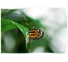Butterfly Fancy Poster