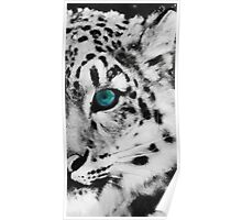 animals snow leopard Poster