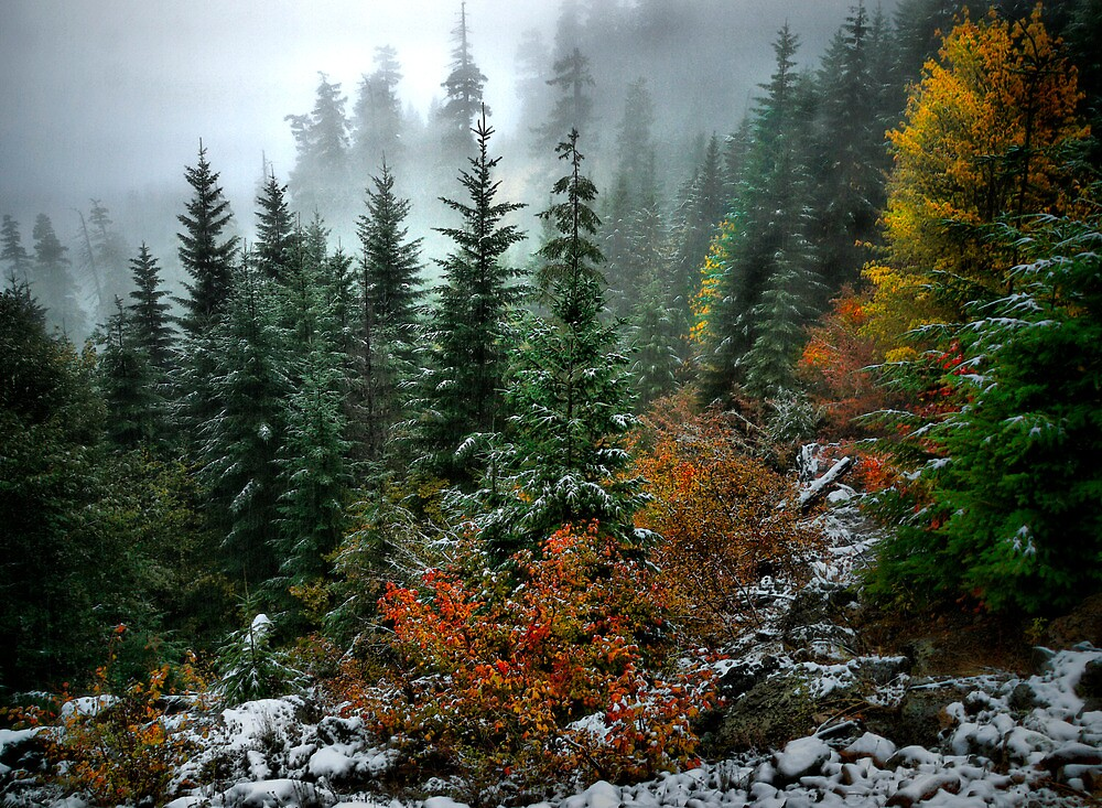 All His Glory by Charles & Patricia   Harkins ~ Picture Oregon