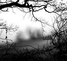 Trees Frame Trees by EdPettitt