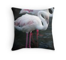 Lesser Flamingo Throw Pillow