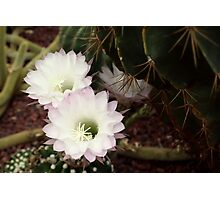 Cacti in the Glasshouse Photographic Print