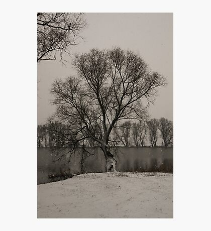 winter scene I Photographic Print
