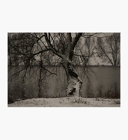 winter scene II Photographic Print