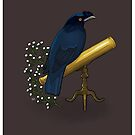 Crested Myna by Ennemme