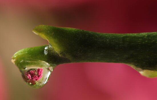 Rose Bouquet by Lynn Gedeon