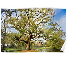 Oak in Orleans Poster