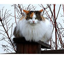 Fluffy on the Fence Photographic Print