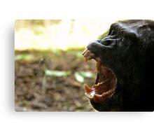 Yawning Chimpanzee  Canvas Print