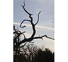 The Running Tree Photographic Print