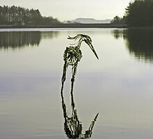 The Heron of Entwistle by Sarah Williams