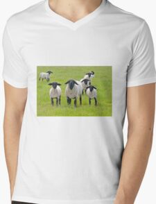 Suffolk Sheep Mens V-Neck T-Shirt