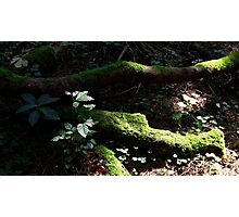 Forest-Floor September Photographic Print