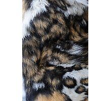 African Wild Dog Fur Photographic Print