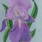 Majestic Purple Iris by Kae'tî Stolarski