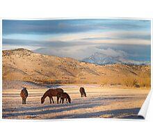 Rocky Mountain Colorado Country Morning Poster