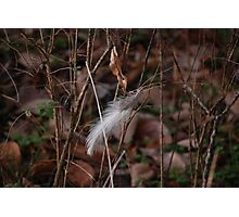 Lonely Feather Photographic Print