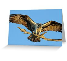 Thats what i call wings ! Greeting Card