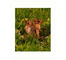 Two Baby Chipmunks Art Print