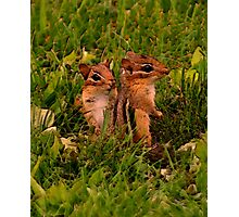 Two Baby Chipmunks Photographic Print