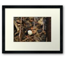 Black Widow Spider Mother Framed Print