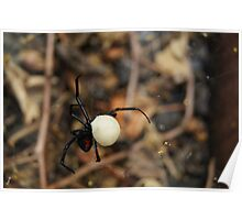 Black Widow Spider Mother Poster