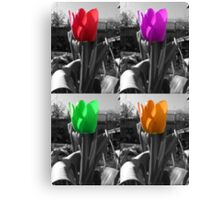 multi-coloured tulips Canvas Print